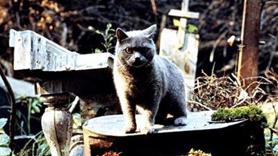 'Pet Sematary': Mira las primeras fotos del remake